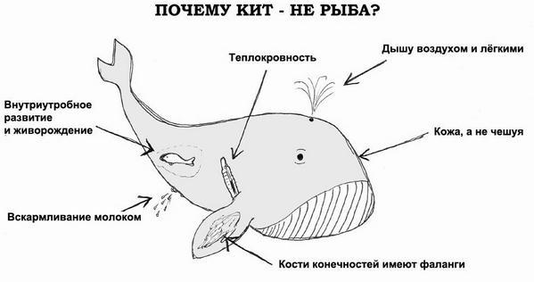 kit_004