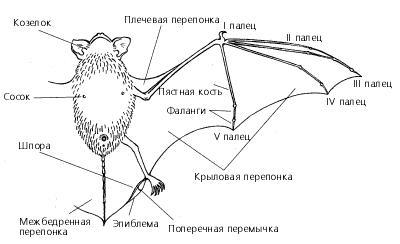bat_05