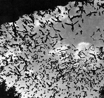 bat_07