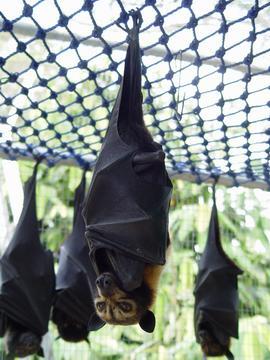 bat_17