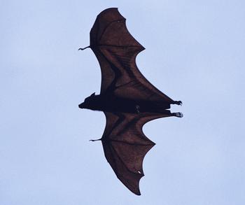 bat_18