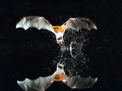 bat_22