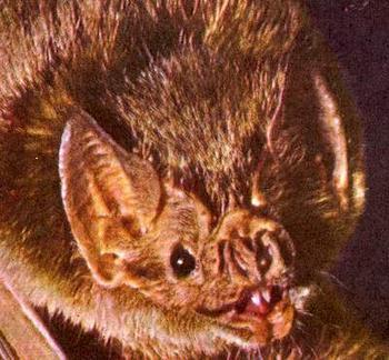 bat_23