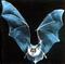 bat_s