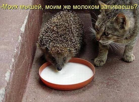 ezhik_11
