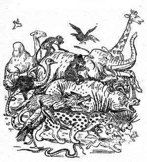 book_krokodil_4