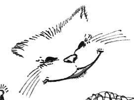 cat_karab