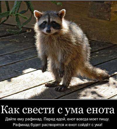 enot_18