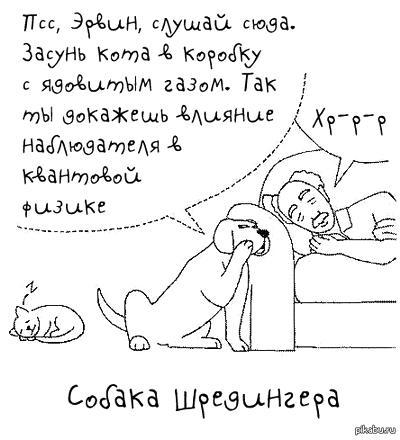 kot_9_08_05