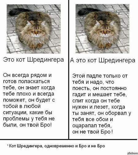 kot_9_08_10