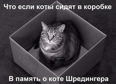 kot_9_08_12