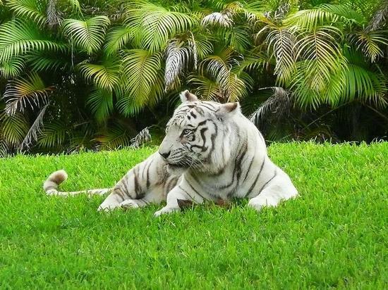tigr_1_07