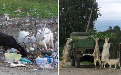 Показательная оргия козы сидоровой