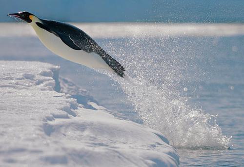 pingvin_05