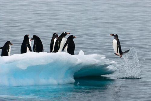 pingvin_06