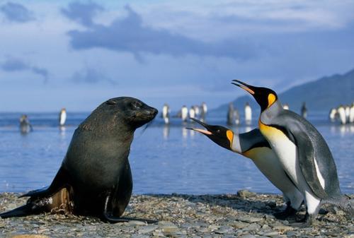 pingvin_07
