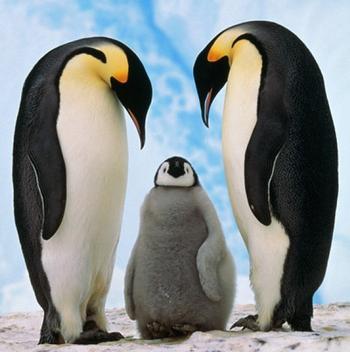 pingvin_10