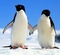 pingvin_s