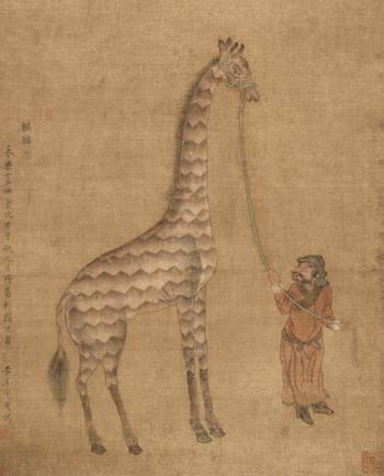 Giraffes_09