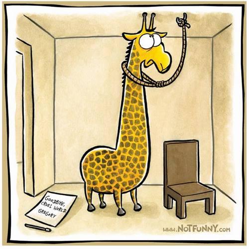 Giraffes_26a