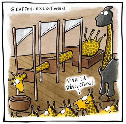 Giraffes_26b