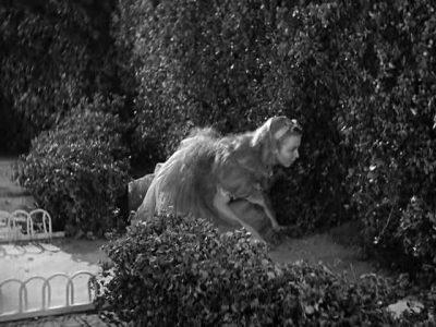 1933_Alice_in_Wonderland_269